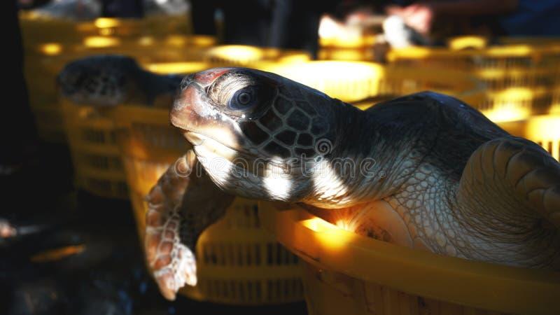 De schildpad in een mand ter plaatse stock afbeelding