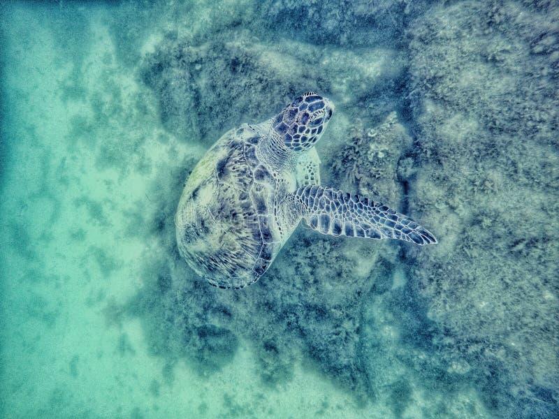 De schildpad eet stock fotografie