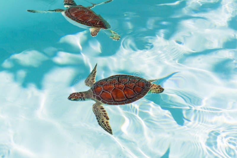 De schildpad van de baby in het water royalty-vrije stock afbeeldingen