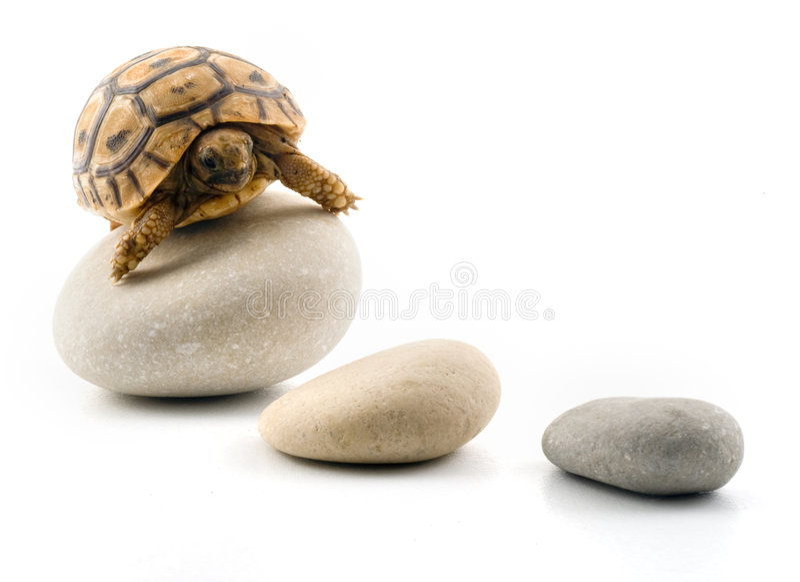 De schildpad van de baby op kiezelstenen stock foto