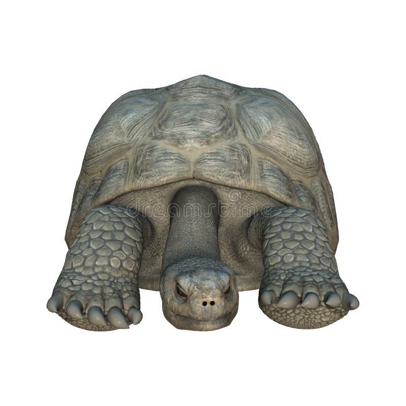 De schildpad van de Galapagos vector illustratie