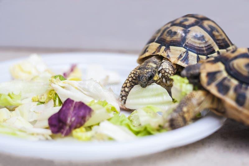 De schildpadden hebben lunch royalty-vrije stock afbeeldingen