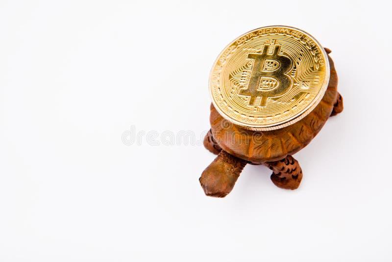 De schildpadstudio van het Bitcoinmuntstuk royalty-vrije stock afbeeldingen