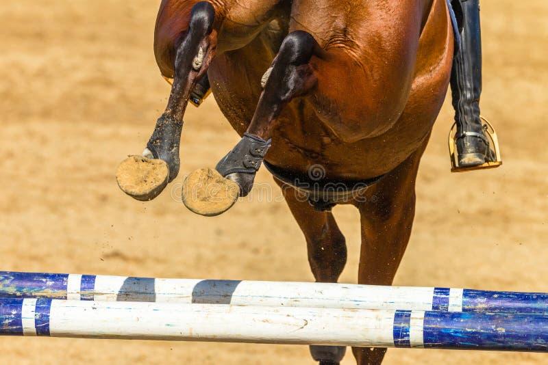 De Schoenen Polen van paardrider jump rear legs closeup Hoofs stock foto's
