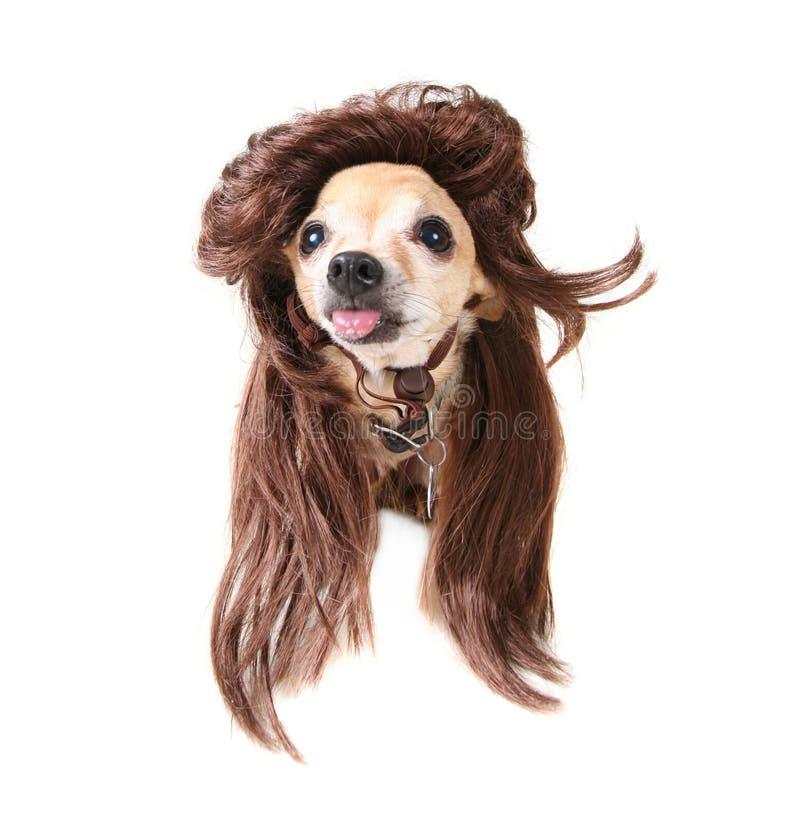 De schommelende hond van de pruik stock afbeelding