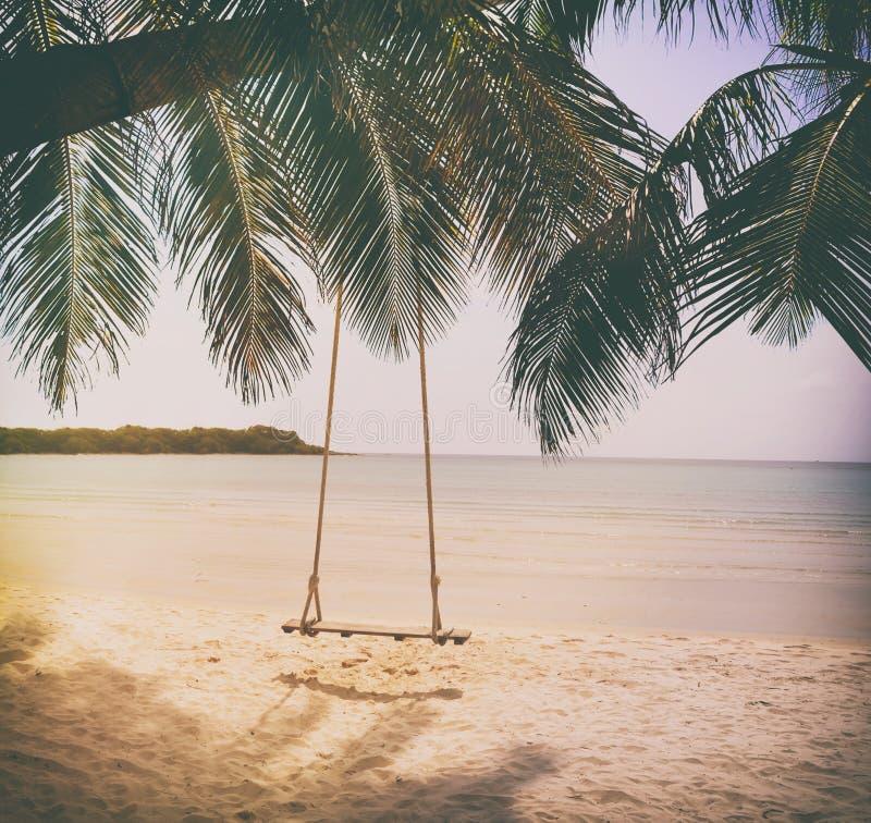 De schommeling hangt van kokosnotenpalm royalty-vrije stock foto