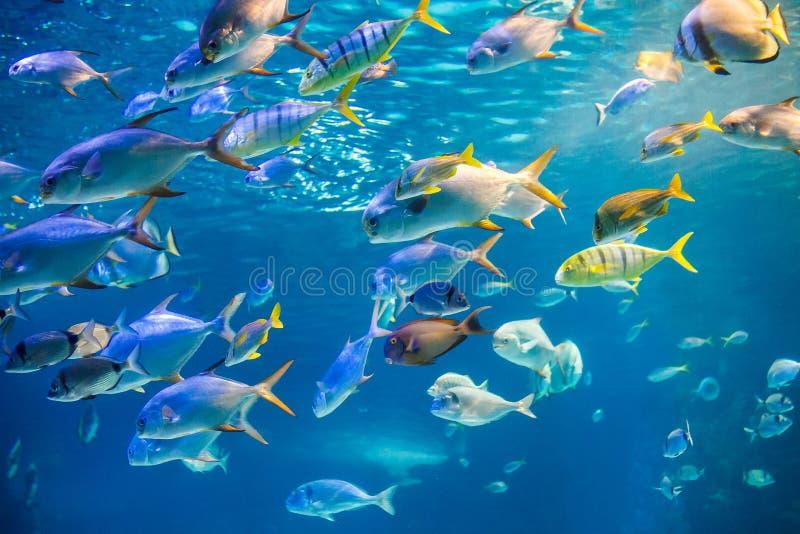 De school van overzeese vissen zwemt aan onderwateroppervlakte royalty-vrije stock foto