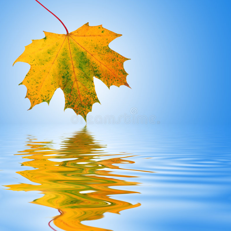 De Schoonheid van het Blad van de herfst royalty-vrije stock fotografie
