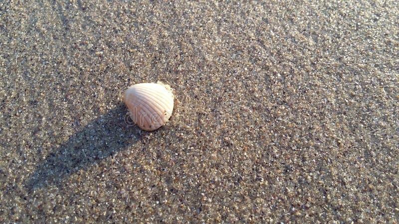 de schoonheid van het zandige piepgeluid en shells, royalty-vrije stock fotografie