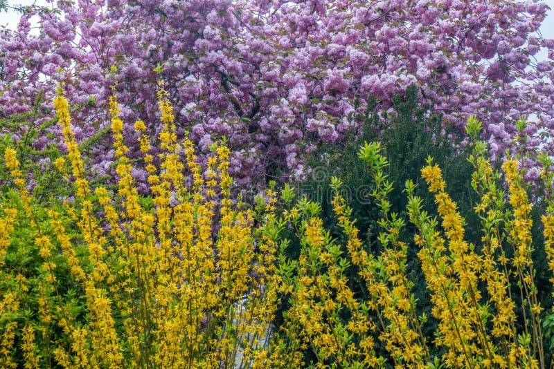 De schoonheid van kleurrijke bladeren in de lente stock afbeeldingen