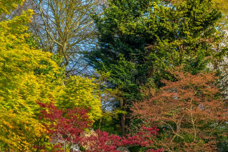 De schoonheid van kleurrijke bladeren stock fotografie