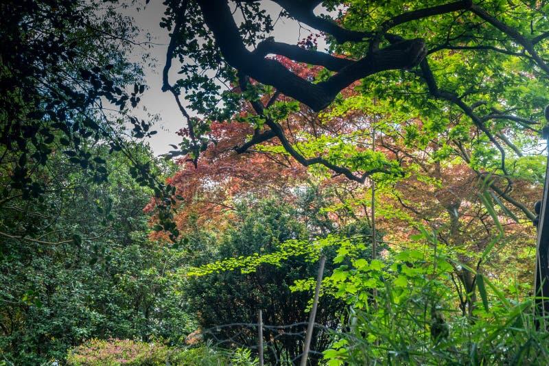 De schoonheid van kleurrijke bladeren in de lente royalty-vrije stock afbeelding