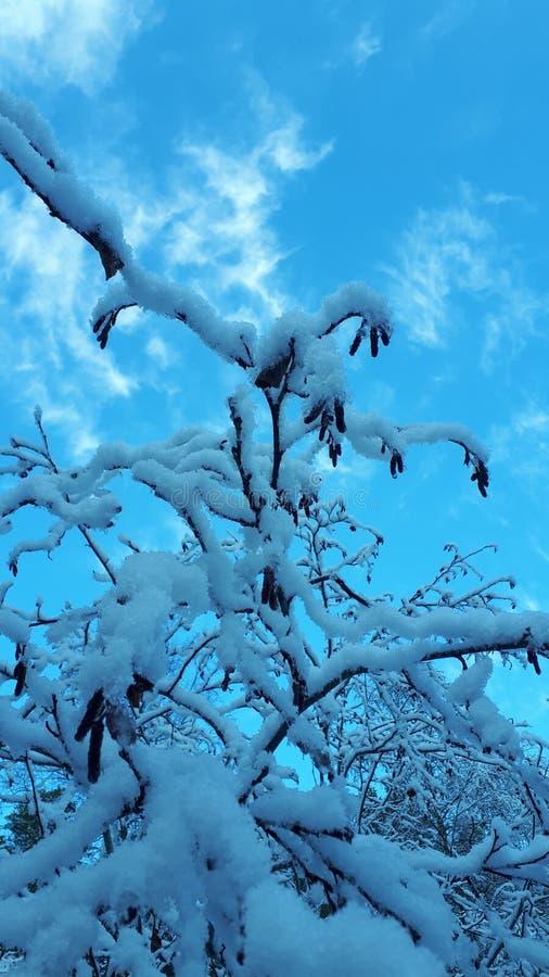 De schoonheid van de sneeuw stock fotografie