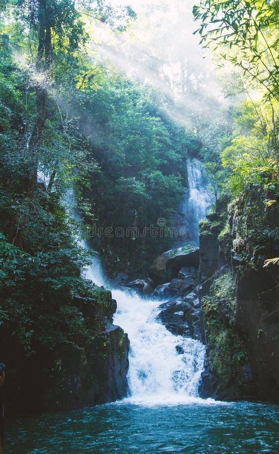 De schoonheid van de waterval in het bos royalty-vrije stock afbeeldingen