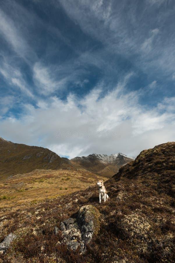 De schor hond zit op rotsen op een stijging dichtbij Dempster-weg, Yukon, Canada royalty-vrije stock foto