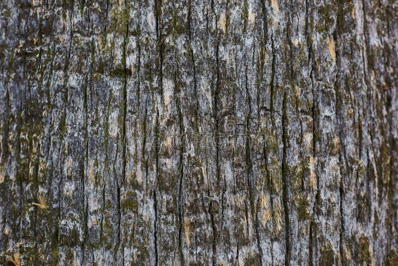 De schors oude textuur van de pijnboomboom, achtergrond royalty-vrije stock foto