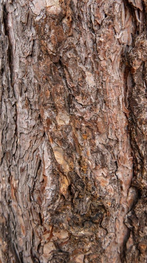 De schors van de boom als achtergrondtextuur stock fotografie