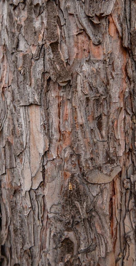 De schors van de boom als achtergrondtextuur stock afbeelding