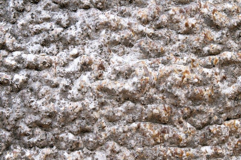 De schors van de baobab royalty-vrije stock afbeelding