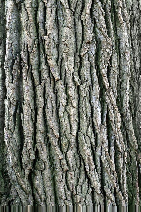 De Schors van de boom. stock afbeelding