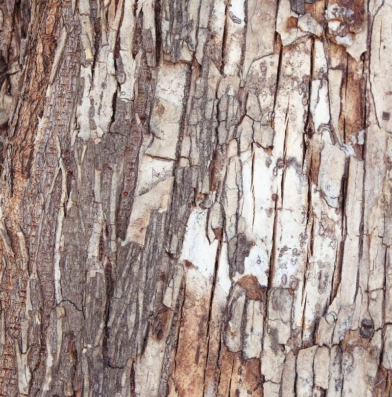 De schors van de boom stock fotografie
