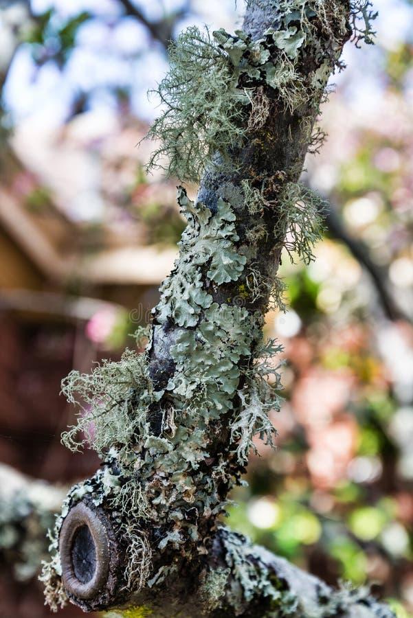 De schors van de boom met mos wordt behandeld dat royalty-vrije stock foto's