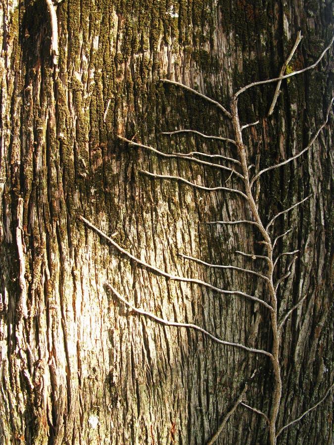 De schors van de boomstam stock foto
