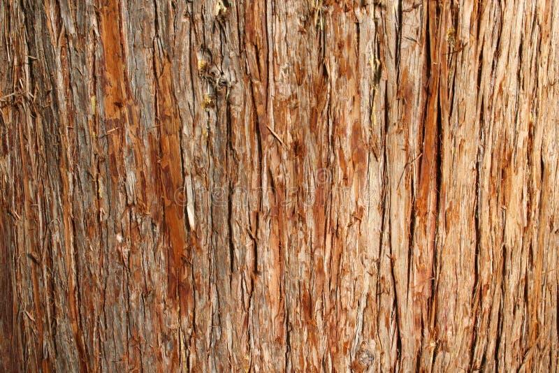 De Schors van de ceder stock afbeeldingen