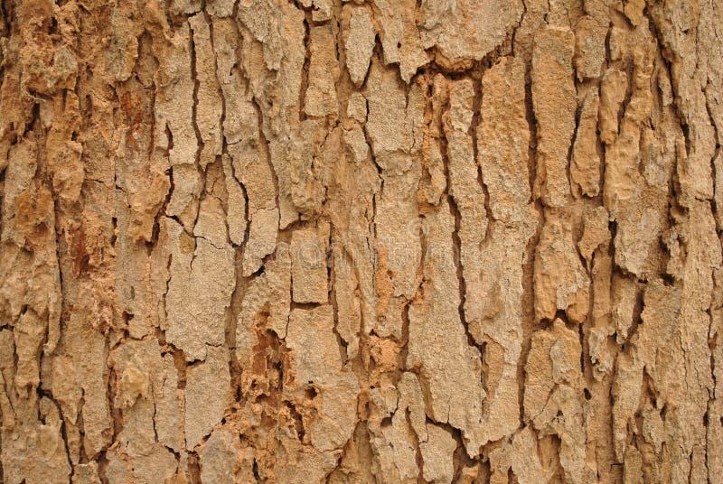 De schors van een boomtextuur royalty-vrije stock foto's