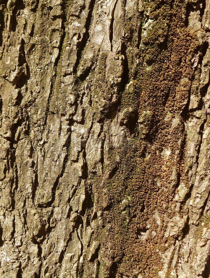 De schors van de oude boom stock afbeeldingen