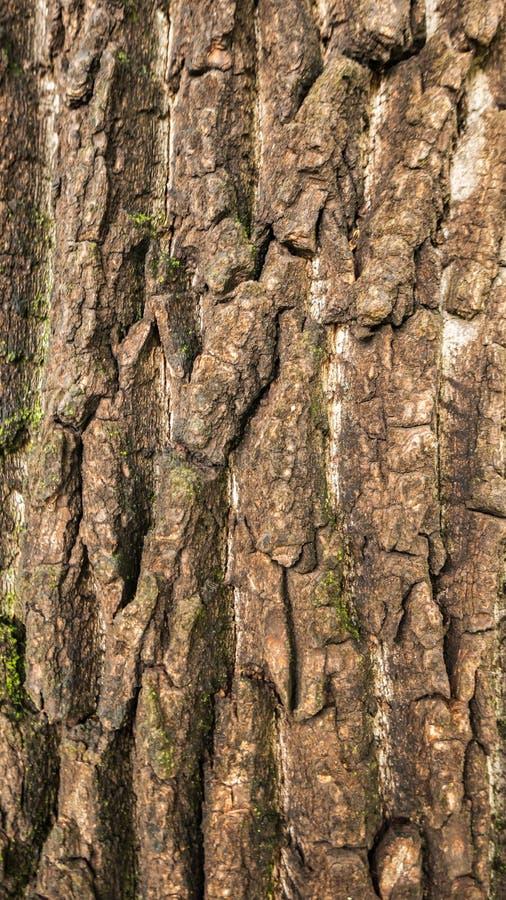 De schors van de oude boom is de achtergrond stock afbeeldingen