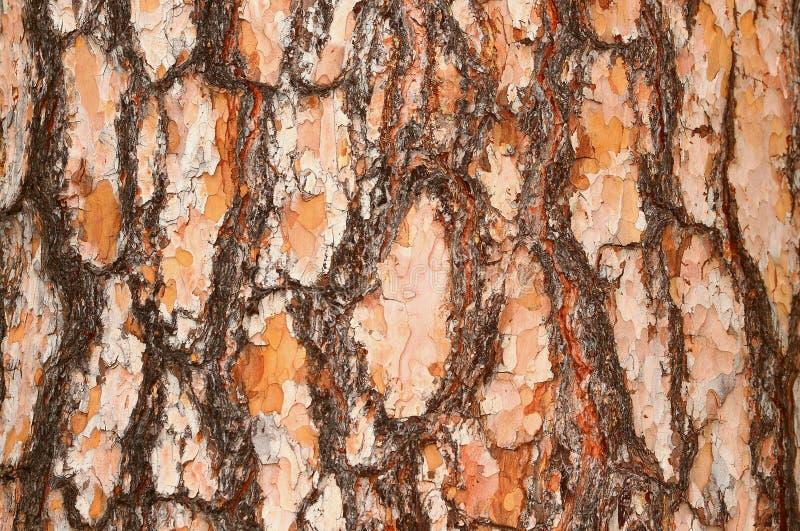De schors van pijnboom 1 royalty-vrije stock afbeeldingen