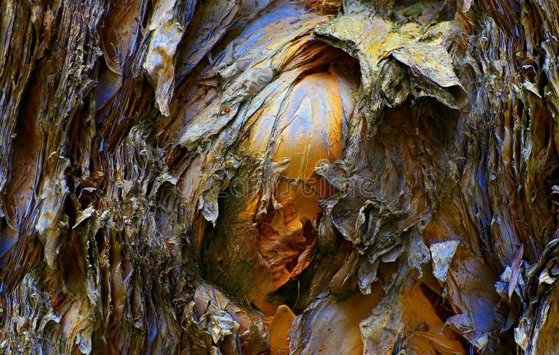 De schorstexturen van de eucalyptusboom stock foto's