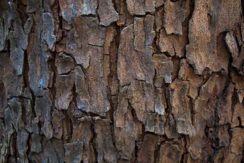 De schorstextuur van de boom stock foto