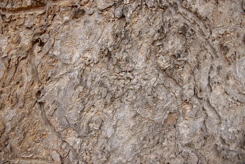 De schorstextuur van de Grunge oude boom Grijze houten schorsclose-up De doorstane grungy achtergrond van de oppervlaktefoto royalty-vrije stock foto's