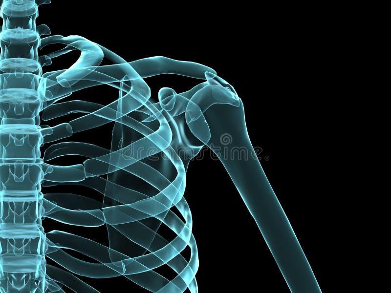 De schouder van de röntgenstraal royalty-vrije illustratie
