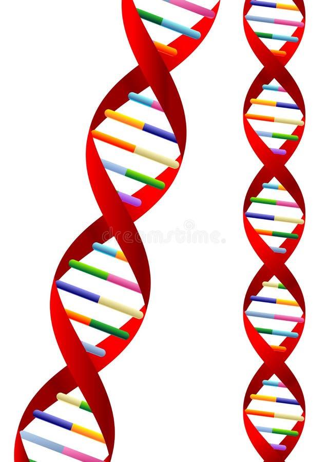 De schroef van DNA vector illustratie