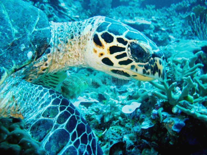 De scuba-duiker draait om de camera te bekijken Het blauwe water is diep op de achtergrond De scuba-duiker draagt in volledig mat royalty-vrije stock foto's
