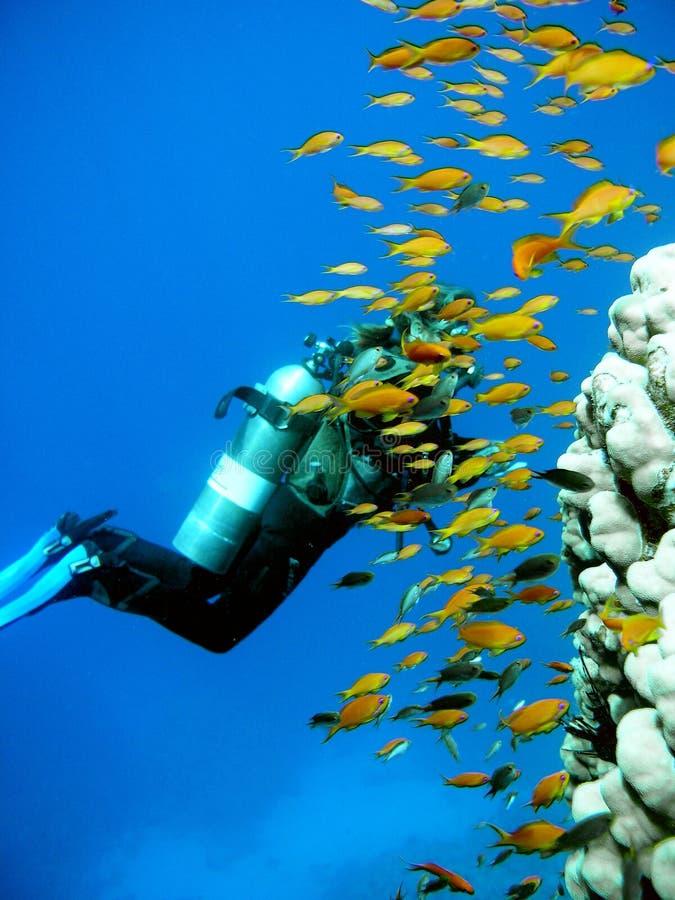 De Scuba-duiker van de vrouw royalty-vrije stock afbeeldingen