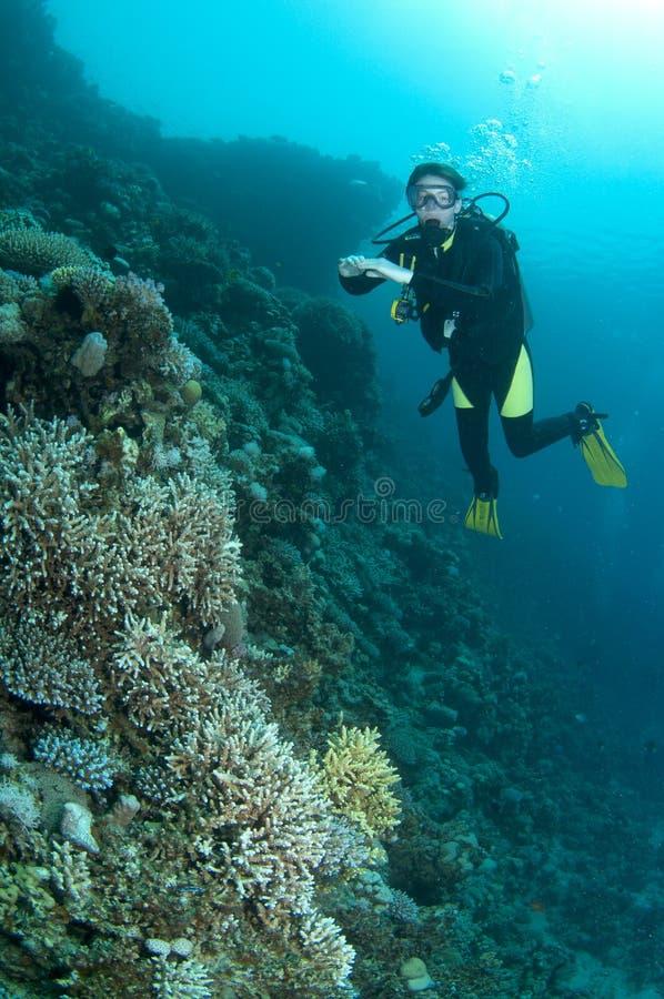 De scuba-duiker van de vrouw op koraalrif stock foto's