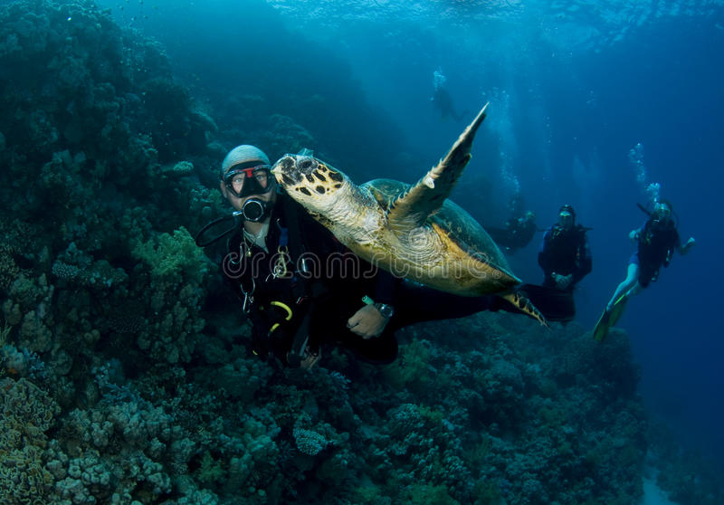 De scuba-duiker zwemt met groene schildpad stock afbeeldingen