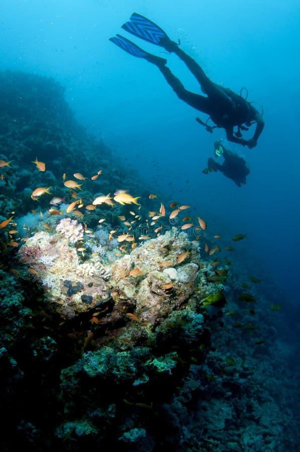 De scuba-duikers zwemmen over ertsader stock foto