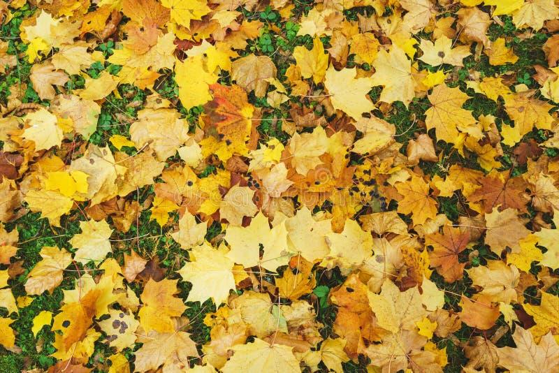 De seizoengebonden de herfstachtergrond van heldere sinaasappel gaat ter plaatse weg Autumn Landscape royalty-vrije stock fotografie