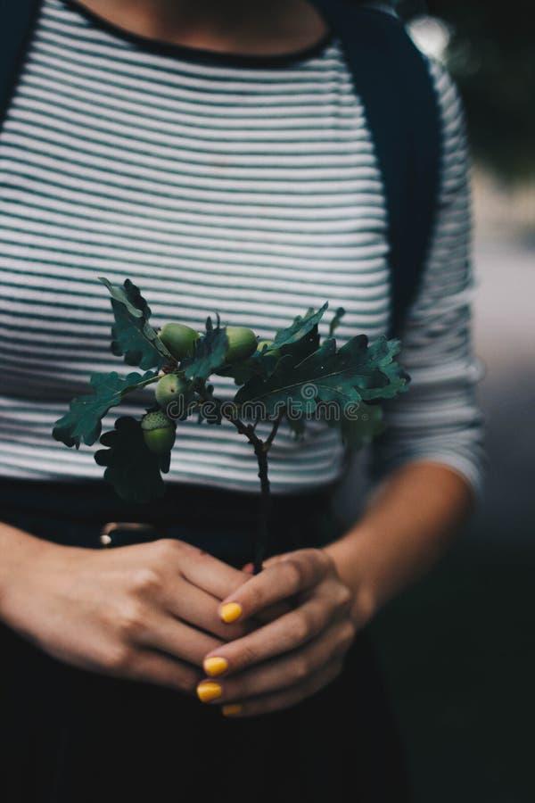 De selectieve Foto van de Focus van Groene plant op Person 's Hands stock afbeeldingen
