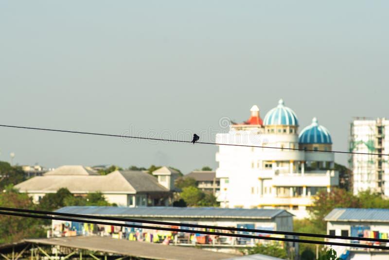 De selectieve nadruk op weinig vogel houdt op cabel met vaag landschapsbos en cityscape op achtergrond stock afbeeldingen