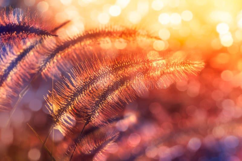 De selectieve nadruk van gress bloeit op het gebied met zon lichte eff stock afbeeldingen