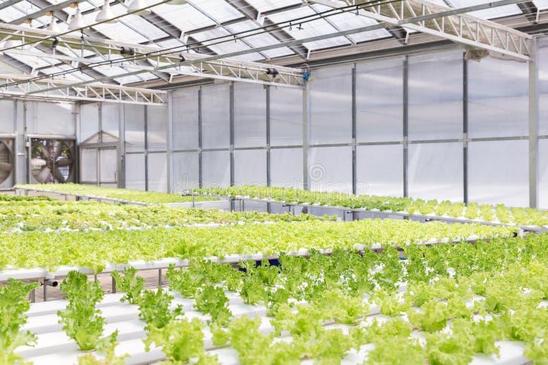 De serre van het hydrocultuursysteem en organische groentensalade in hydrocultuurlandbouwbedrijf stock afbeeldingen