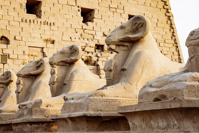 De sfinxensteeg van de Karnaktempel Ram geleide beeldhouwwerken voor Karnak-Tempel in Luxor stock fotografie