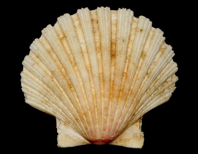 De shell (het symbool van de benzinepost) witte voorzijde stock afbeelding