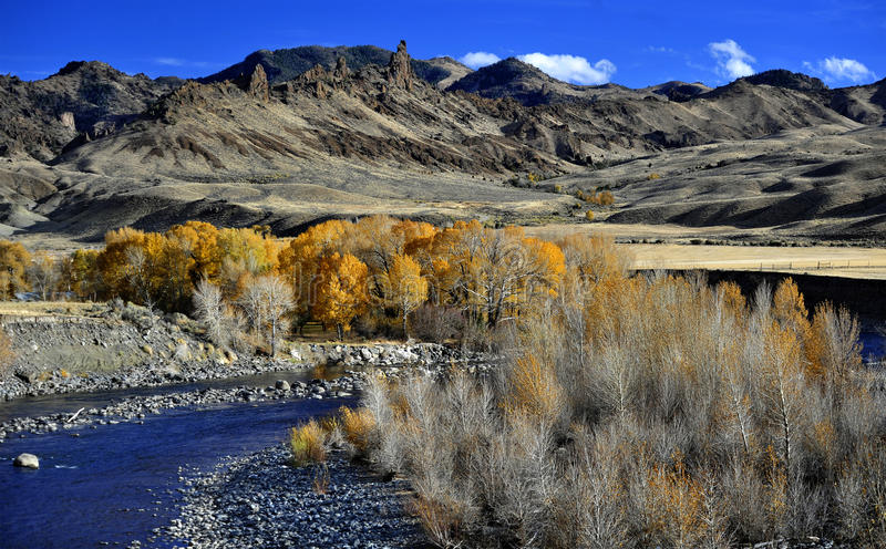 De Shoshone-Rivier en Verblindend Autumn Leaves Outside Cody, Wyoming stock foto